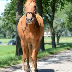 Paard Chico